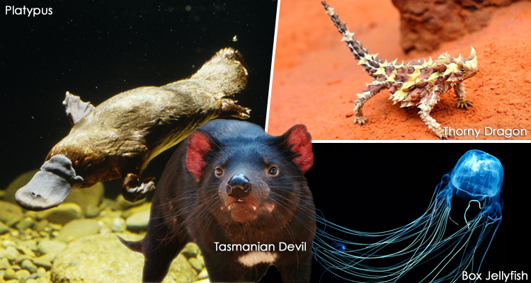 Rarest Animal Species in Australia