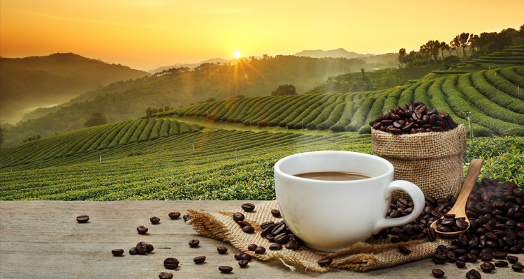 Climate Change And Coffee