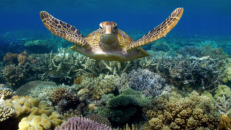 CORAL REEFS AND MARINE LIFE