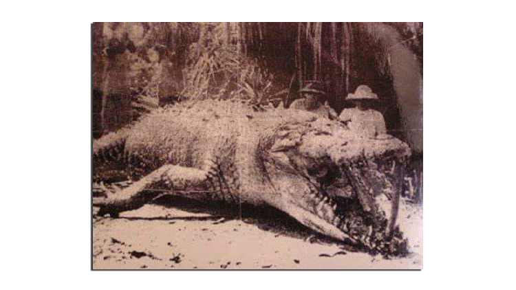Giant Crocodile in the Philippines