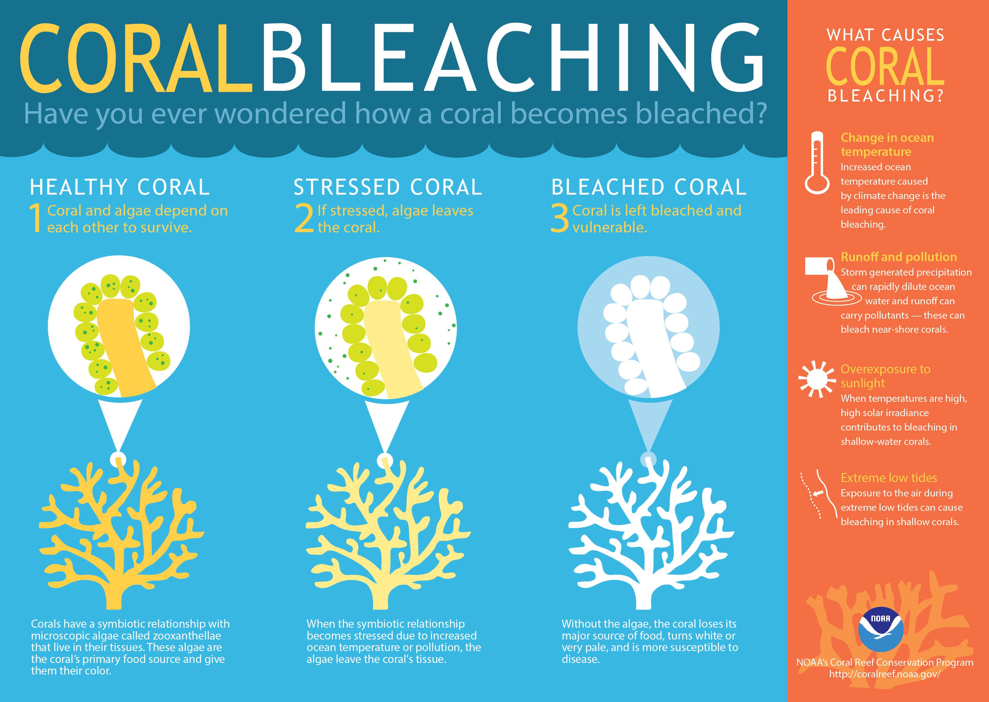 CORAL WHITENING/BLEACHING