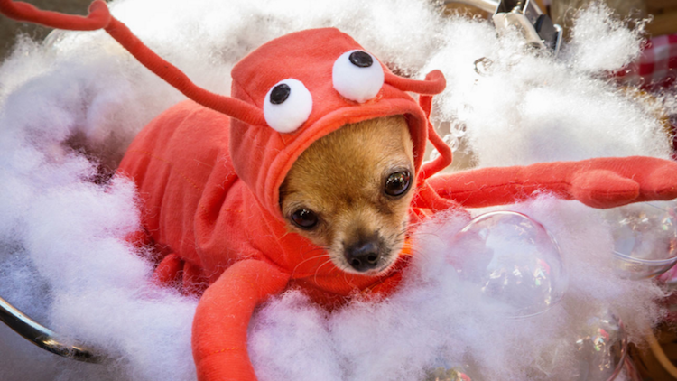 How Doggy Costumes Could Do More Harm Than Good