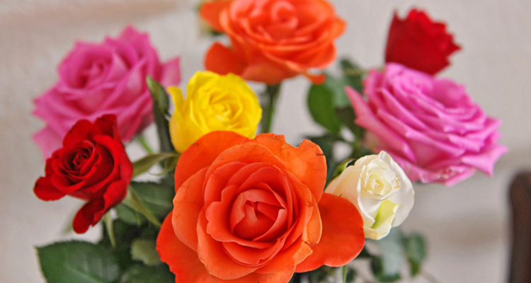 Roses colors meaning