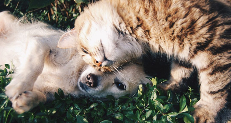 You need to make sure that your dog or cat is eligible for export to Australia