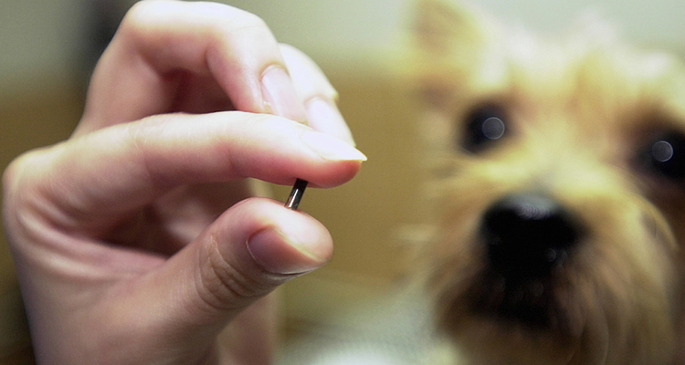 Get your dog or cat microchipped for identification purposes
