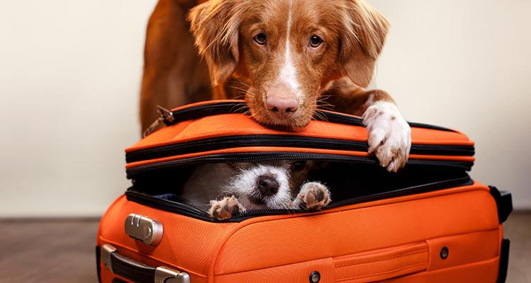 Make your pets travel arrangements