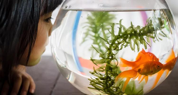 Aquarium Therapy