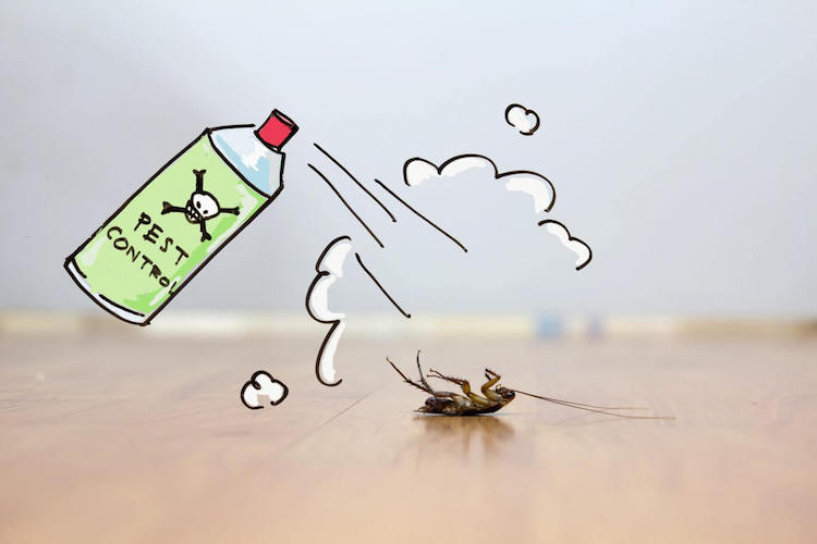 How Cockroaches Develop Cross-Resistance to Insecticides